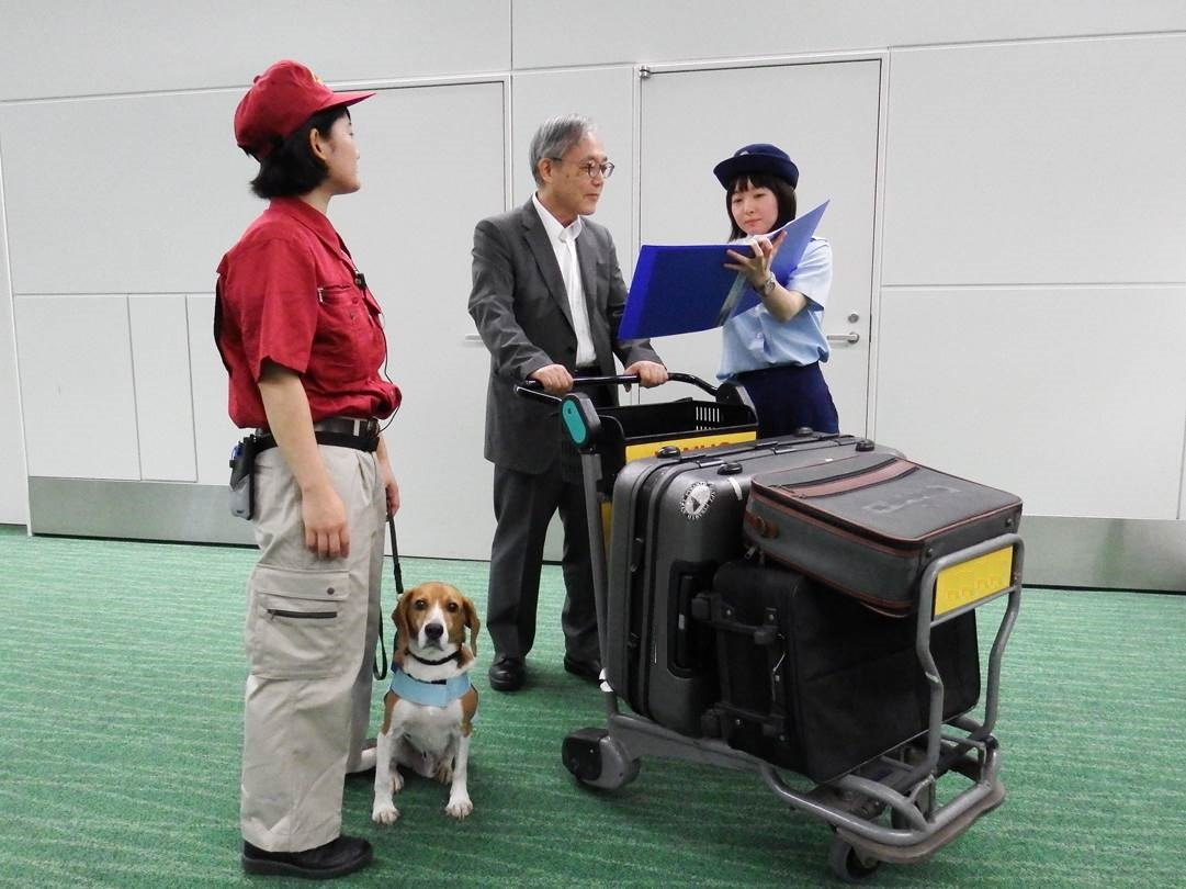 空港 問い合わせ 羽田 検疫