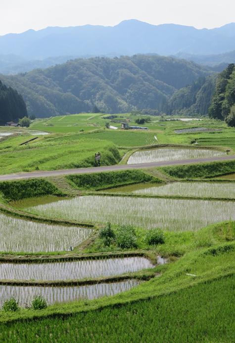 中国四国地域の農業構造イメージ
