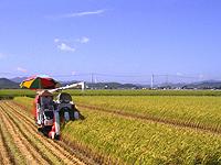 【写真】稲刈りの風景