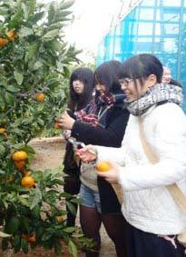 24大学生との意見交換会・収穫体験2
