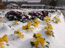 県南部の高原に積雪