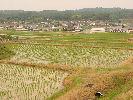 田植え後の田