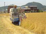 高松市 裸麦の収穫作業 平成19年5月14日