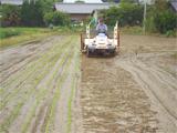 さぬき市 さぬきよいまいの田植え作業 平成19年6月18日