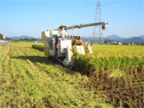 さぬき市 さぬきよいまいの収穫作業 平成20年10月15日