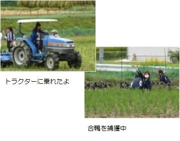 農業体験3