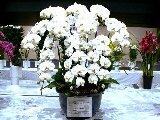徳島県花き展示品評会