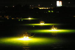 シラスウナギ漁 平成20年2月(阿南市)
