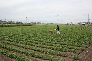 6月上旬に行う中耕作業の様子