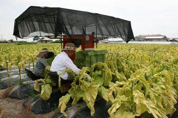 管理収穫機を使った収穫作業