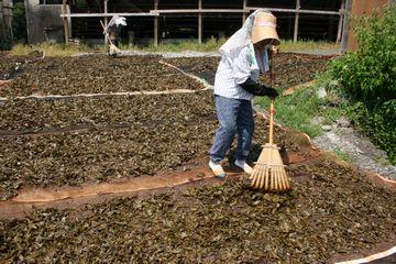 乾燥作業の様子