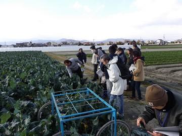 徳島市不動地区において:ブロッコリーの収穫体験から
