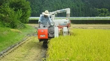 収穫作業の様子1