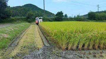 収穫作業の様子2