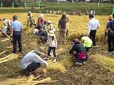 米フェスタ2013「親子稲刈りウオッチング」