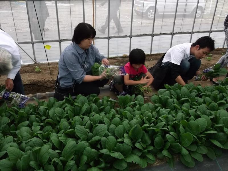 251005収穫体験