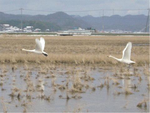 ふゆみず田んぼ(島根             県松江市)