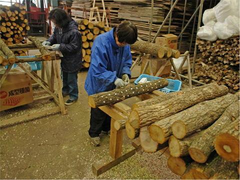 原木栽培しいた             けの植菌(島根県隠岐の島町)