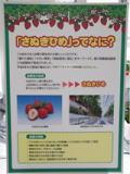 県育成品種「さぬき姫」の展示