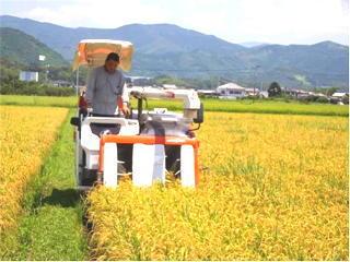 早期栽培米の収穫始まる(収穫作業)
