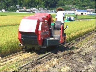 WCS稲の収穫が始まる(専用収穫機での収穫作業)