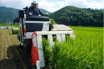 WCS稲の収穫が始まる【撮影:平成22年8月5日】収穫の様子