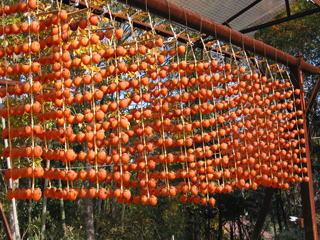 すだれのように吊り下がった串柿1
