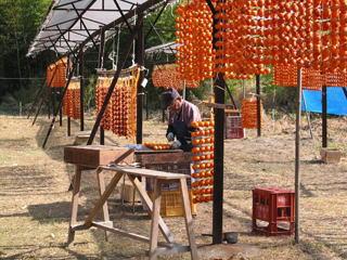 串柿作りの風景