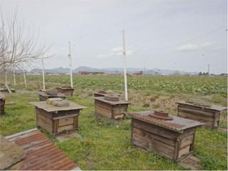 中海干拓地の養蜂場