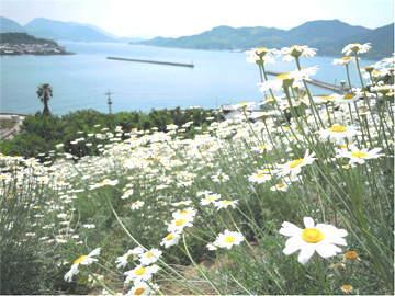 除虫菊と瀬戸内海
