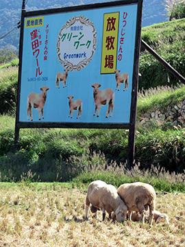 放牧事業を紹介した看板