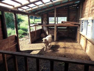 羊小屋の様子
