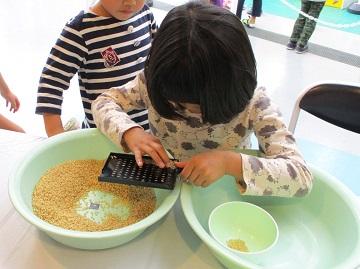 穀粒計数版を使って米粒を数える様子
