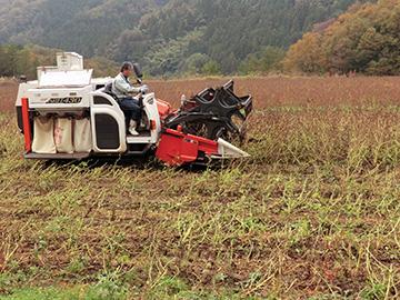 コンバインによる収穫