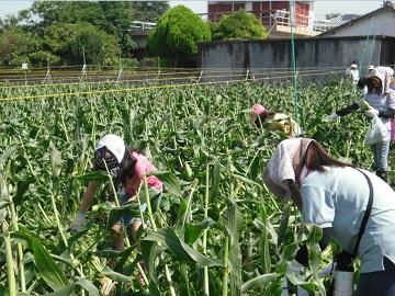 徳島プロジェクト1
