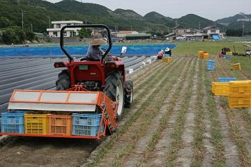 20150514徳島らっきょう収穫トラクター
