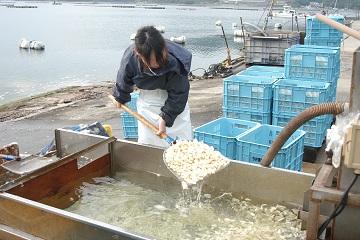 20150514徳島らっきょう洗い