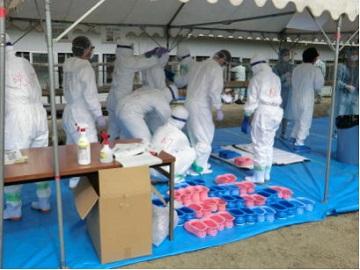 「香川県鳥インフルエンザ防疫演習」防護服の着脱
