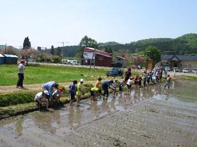 福島町における教育ファーム(黒米田植え体験)
