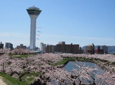 函館市 五稜郭公園