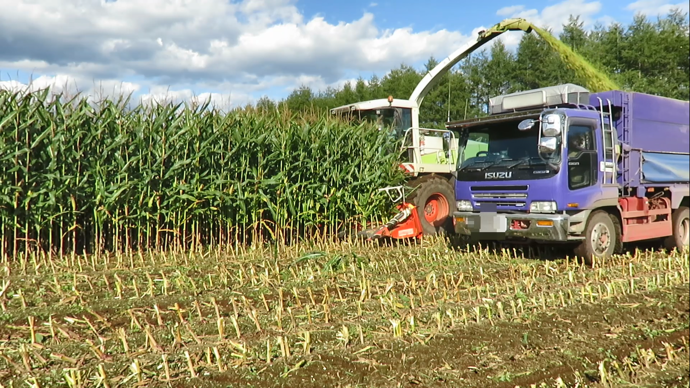 飼料用とうもろこし(デントコーン)の収穫作業