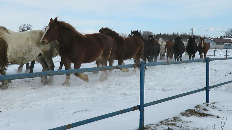 馬追い運動