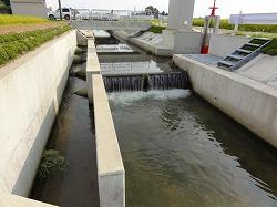 バイパス水路(1箇所)