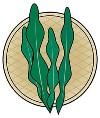 海藻のイラスト