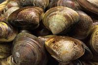 殻付きの貝を買うときは、生きているものを選びましょう。口がしっかり閉じているもの、またはさわるとすぐ閉じるものが新鮮です。