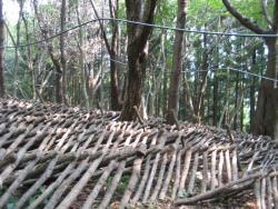 露地栽培の原木しいたけ