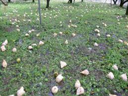 果樹被害写真2