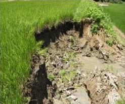 農作物共済の被害 土砂崩れによる稲の流出(風水害)