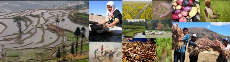 世界農業遺産・日本農業遺産:農...