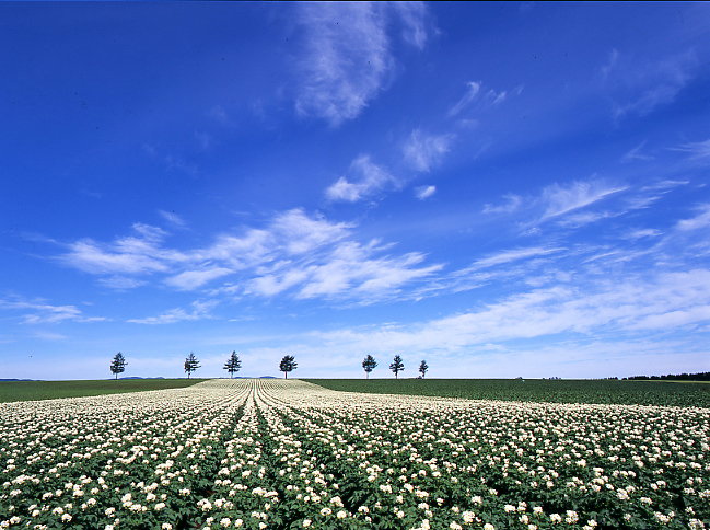 メルヘンの丘 めまんべつ(網走郡大空町):農林水産省